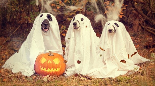 Protect Your Pet from Halloween Dangers
