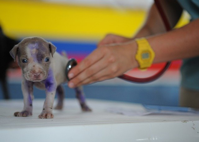 VETSS Provides Non-Emergency Care For All Animals!